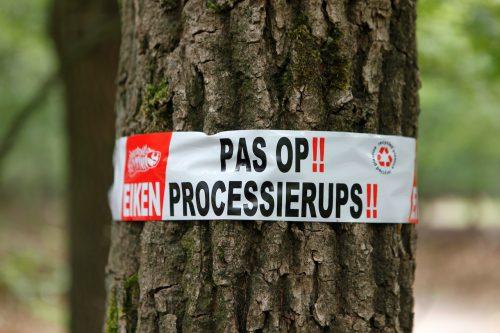 Waarschuwingslint op een eikenboom voor eikenprocessierups